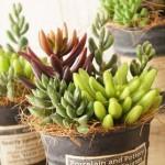 流行りのインテリア♪可愛い多肉植物でおしゃれな空間作り♡